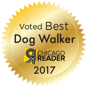 best dog walker chicago top rated