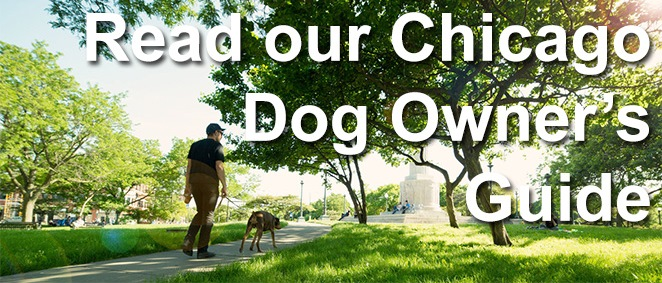 read our chicago dog owners guide