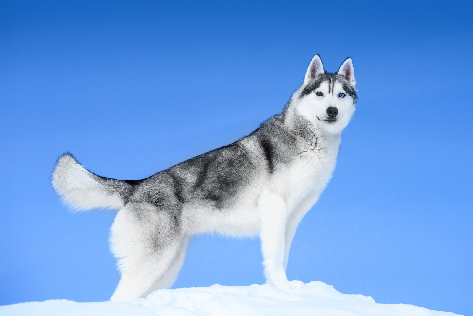 Best Dog Breeds For Cold Weather