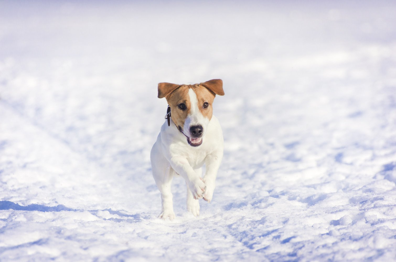 Winter Activities For Dogs In Chicago Windy City Paws