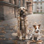 Tips for Walking Your Dog in Chicago