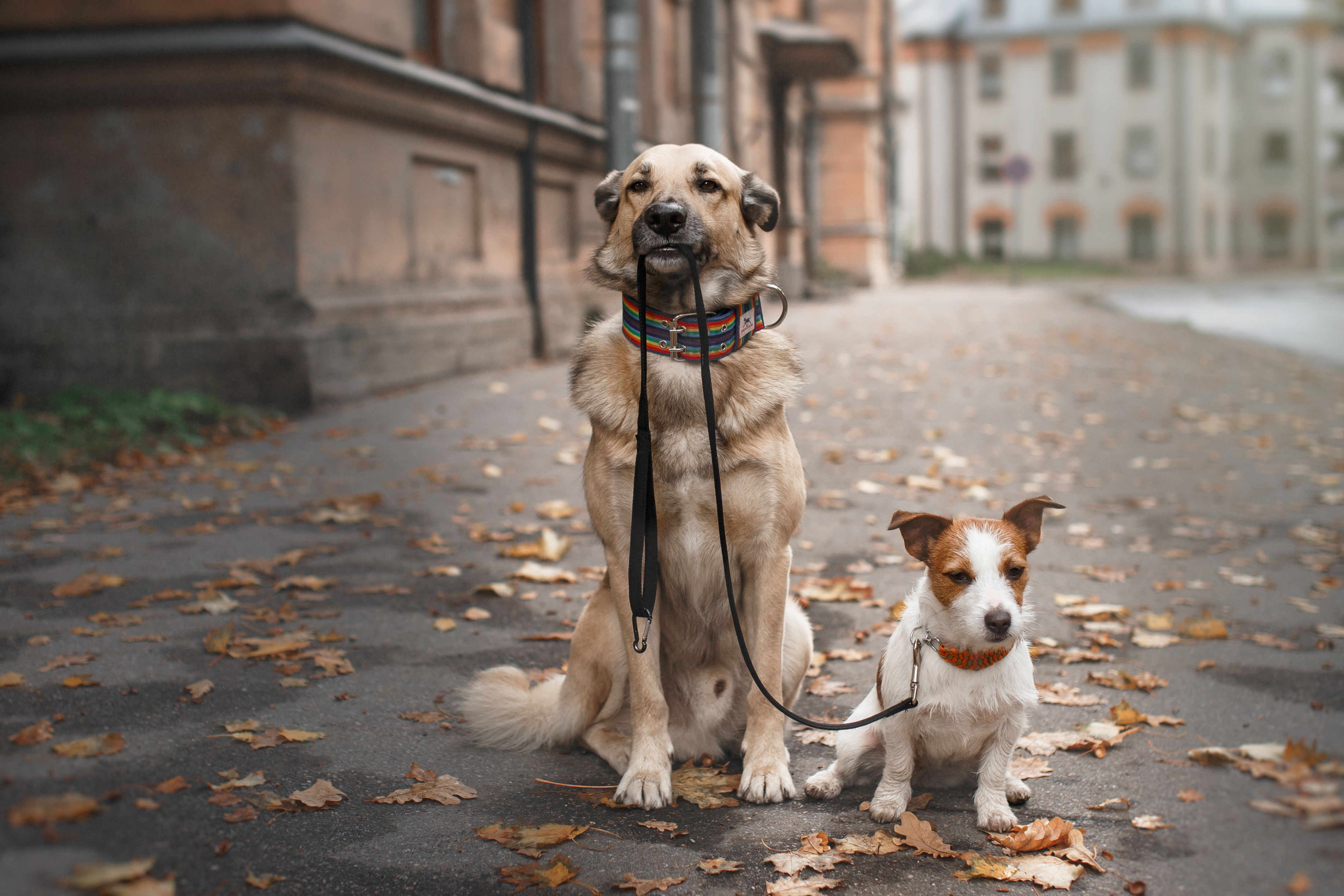 Dog Walking Jobs Chicago