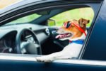 Are dogs allowed in Uber, Lyft and Chicago Taxis?