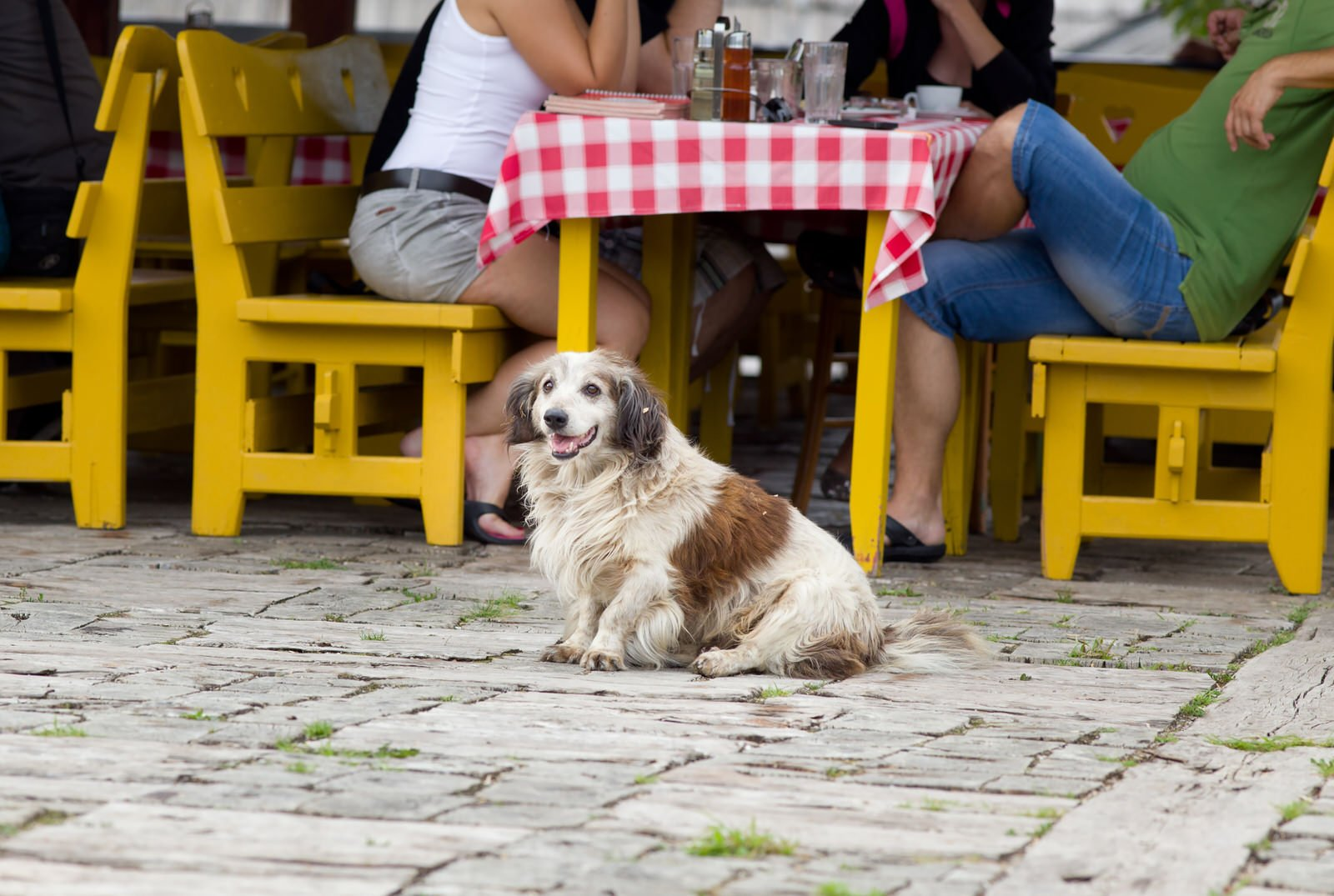 Best Dog Friendly Patios In Chicago