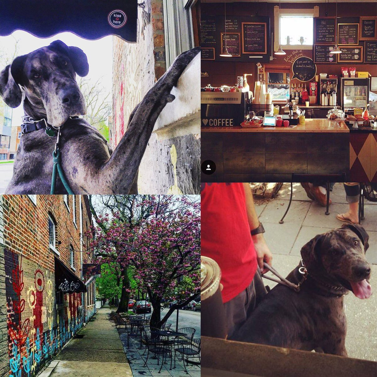 7 Great Dog-Friendly Coffee Shops in Chicago - Windy City Paws