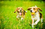 Eco-friendly Dog Products For A Greener Life