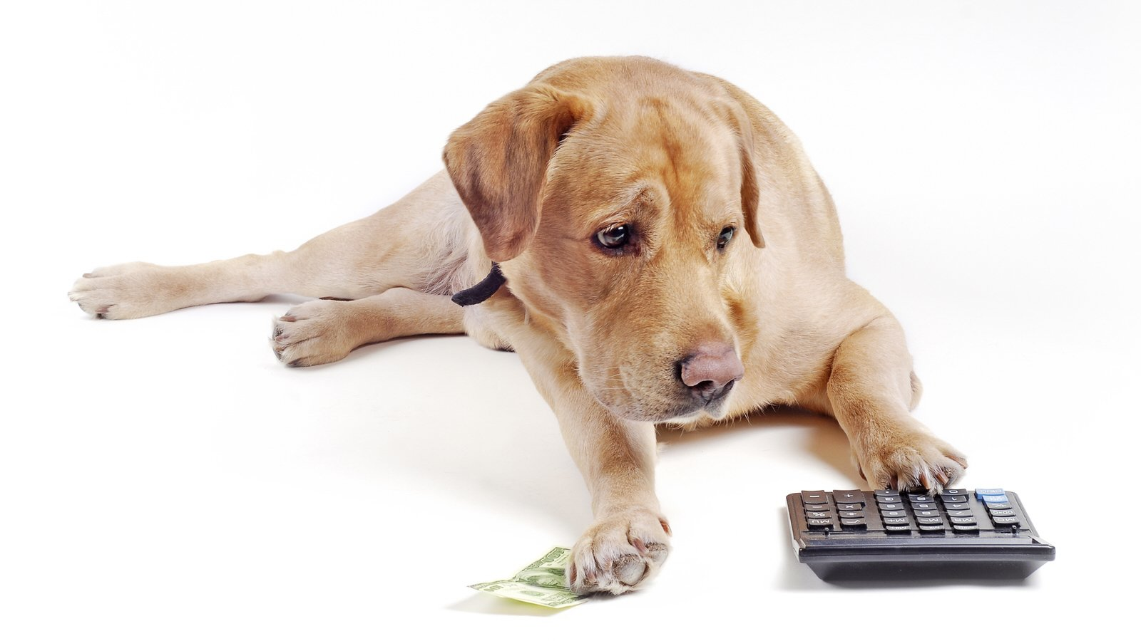 How Much Does A Dog Collar Cost