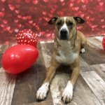 Pet Spotlight: Max