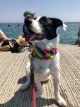 Pet Spotlight: Murphy