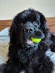 Pet Spotlight: Lloyd