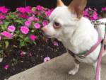 Pet Spotlight: Bella
