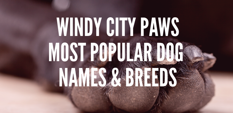 WINDY CITY PAWS MOST POPULAR DOG NAMES AND BREEDS - Windy