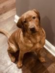 Pet Spotlight: Tex