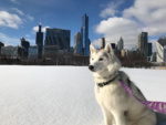 Windy City Paws Pupdate!