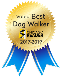 best chicago dog walkers 2017-2019
