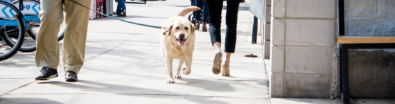 Advantages of Employee Dog Walkers vs Independent Contractors