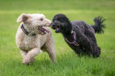 Top 10 Safety Tips for Chicago Dog Parks