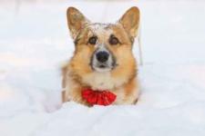 Chicago Winter Dog Fur Tips