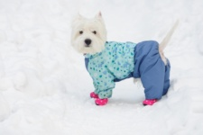 Winterizing your Dog during Chicago Winters