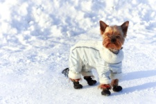 What to Buy to Prepare your Dog for a Chicago Winter