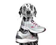 2019 Dog-Friendly 5K Races in Chicago