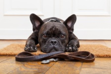 Why You Should Use a Dog Walker -- Even if You Work from Home!