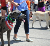 2019 Dog-Friendly Chicago Events