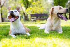 7 Must-Know Rules of Dog Park Etiquette