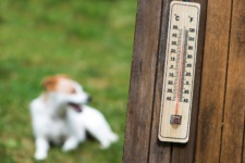 Walking Your Dog During Chicago Heat Waves