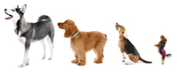 Picking the Right Dog For Your Chicago Life