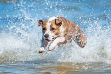 A Guide to Letting Your Dog Swim in Lake Michigan
