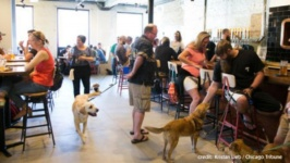 Dovetail Brewery: A Dog-Friendly Beer Haven