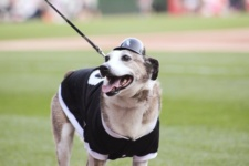 Bark at the Park 2016: A guide to preparing your dog for the big event!