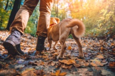 Benefits of Hiking With Your Dog