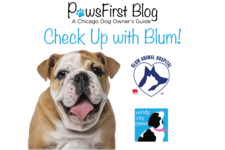 Check Up with Blum: Allergies in Dogs