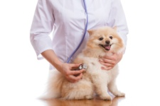 Check Up with Blum: What do Fear Free vet visits mean for you and your pet?
