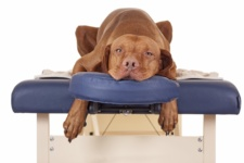 Massage for Dogs (Part 1) — Benefits and Differences