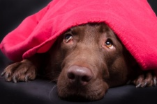 Check Up with Blum: Firework and Thunderstorm Phobia in Dogs