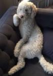 Pet Spotlight: George