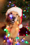 Check Up with Blum: Holiday Hazards
