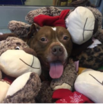 There's No Place Like a Foster Home for the Holidays