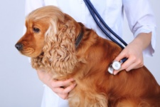 Check Up with Blum: Pet Obesity