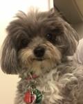 Pet Spotlight: Sophie
