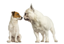 Check Up with Blum: Reading Your Dog's Body Language