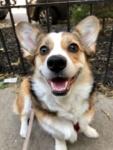 Pet Spotlight: Winnie