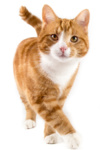 Check Up with Blum: Reading Your Cat's Body Language