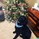 Pet Spotlight: Roscoe