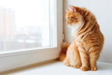 Is My Apartment Cat-Friendly?