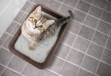 Check Up with Blum: Litter Boxes