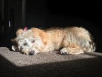 Pet Spotlight: Maddie
